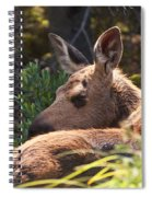 Moose Baby 5 Spiral Notebook
