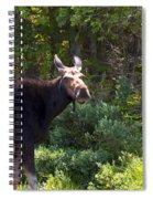 Moose Baxter State Park 4 Spiral Notebook