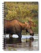 Moose Drinking In A Pond, Tombstone Spiral Notebook