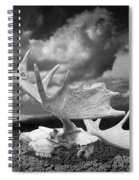 Moose Skull On Parched Earth Spiral Notebook