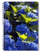 Mophead Hydrangeas Dry Brushed Spiral Notebook