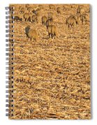 More Sheep To Count To Go To Sleep Spiral Notebook