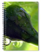 Morning Dew Figs Spiral Notebook