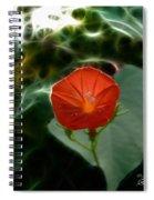 Morning Glory Fractal Spiral Notebook