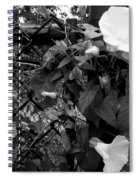 Morning Glorys On A Fence Spiral Notebook