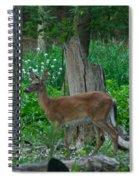 Morning Stroll 7353 1743 Spiral Notebook