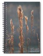 Morning Sunshine On Tall Reeds Spiral Notebook