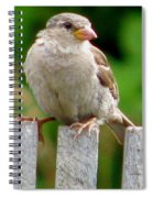 Morning Visitor Spiral Notebook