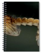 Mosquito Pupa Spiral Notebook