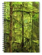 Moss-covered Trees Spiral Notebook