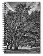 Moss-draped Live Oaks Spiral Notebook