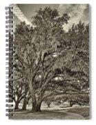 Moss-draped Live Oaks Sepia Toned Spiral Notebook