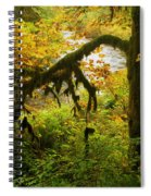 Moss In The Forest Spiral Notebook