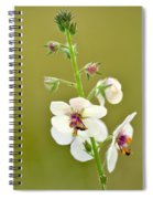 Moth Mullein Spiral Notebook