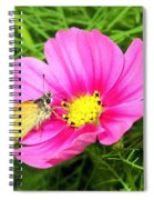 Moth On A Cosmos Spiral Notebook