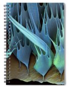 Moth Wing Scales Sem Spiral Notebook