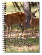 Mother And Yearling Deer Spiral Notebook
