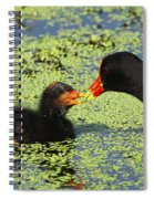 Mother Common Gallinule Feeding Baby Chick Spiral Notebook