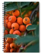 Mountain Ash Spiral Notebook