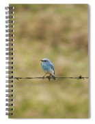 Mountain Bluebird On A Fence Wire Spiral Notebook