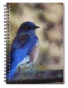 Mountain Bluebird Painterly Spiral Notebook