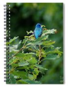 Mountain Bluebird Spiral Notebook