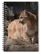 Mountain Lion On The Prowl Spiral Notebook