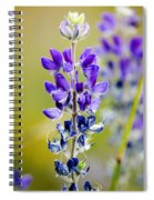 Mountain Lupine Glacier National Park Spiral Notebook