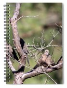 Mourning Dove - Board Of Directors Spiral Notebook