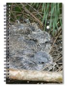 Mourning Dove Chicks Spiral Notebook