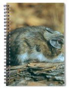 Mouse On A Log Spiral Notebook
