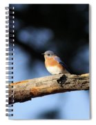 Mr. Bluebird Spiral Notebook