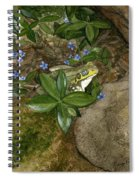 Mr. Frog Spiral Notebook