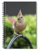 Mrs Cardinal Spiral Notebook