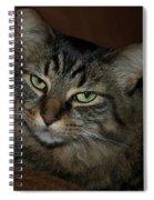 Ms. Bell Spiral Notebook