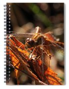 Ms Damselfly A La Fall Mode Spiral Notebook