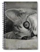 Muffin Spiral Notebook