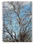 Mulberry Tree In Snow Spiral Notebook