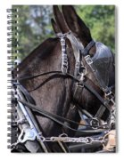 Mule Days - Benson - A Pair Of Aces - Mules Spiral Notebook