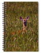 Mule Deer In Wheat Field, Saskatchewan Spiral Notebook