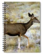 Mule Deer On The Move Spiral Notebook