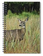 Mule Deer Winthrop Wa 9176 Spiral Notebook