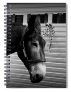 Mule - Tied Up For A While Spiral Notebook
