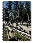 Mules Ear Timber Spiral Notebook