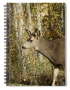 Mulie Buck 3 Spiral Notebook