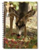 Mulie Buck 4 Spiral Notebook
