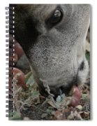 Mulie Buck 5 Spiral Notebook