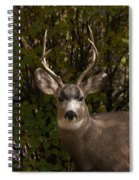 Mulie Buck Spiral Notebook