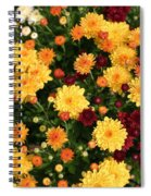 Multi Colored Mums Spiral Notebook
