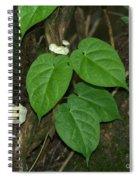Mushroom Between The Leaves Spiral Notebook